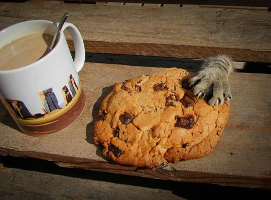 funny-cookie-paw-coffee-cat